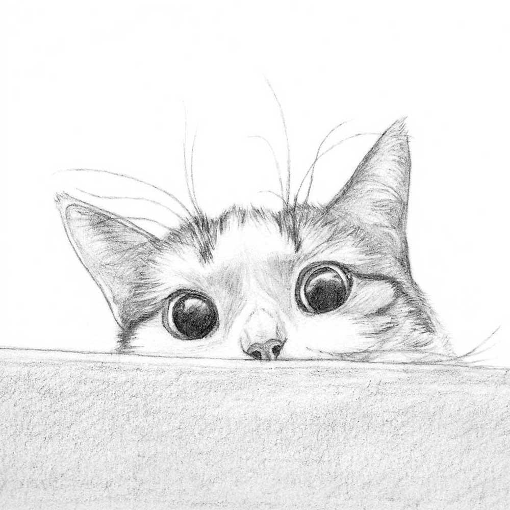 Картинки смешные коты карандашом, картинках
