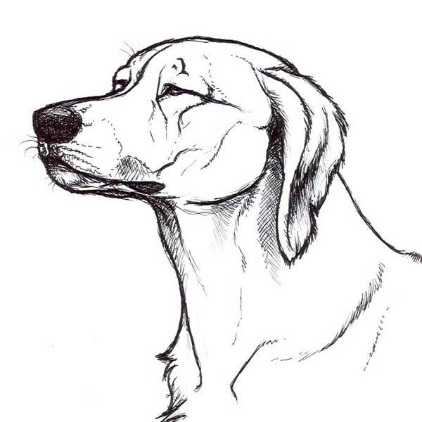 Рисунки собак