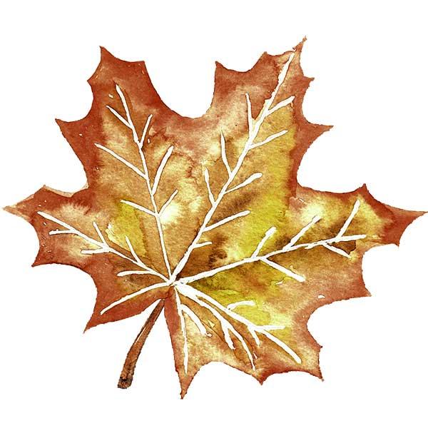 Как нарисовать кленовый лист