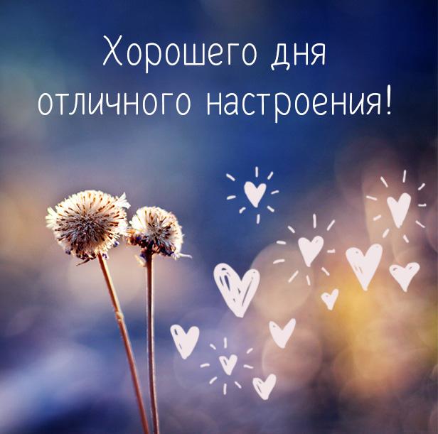 Хорошего дня и отличного настроения Картинки Пожелания | Linedot